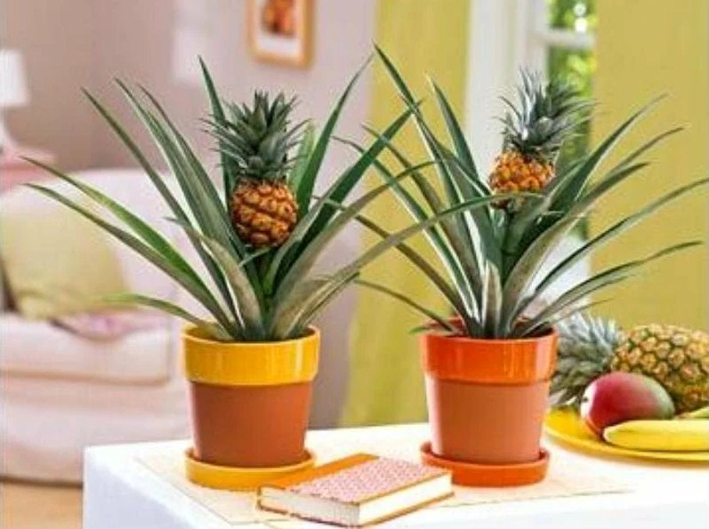 Почему ананасы так популярны в дизайне интерьера?